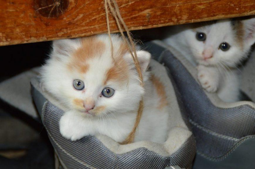 O bem-estar do seu gato – Consultas